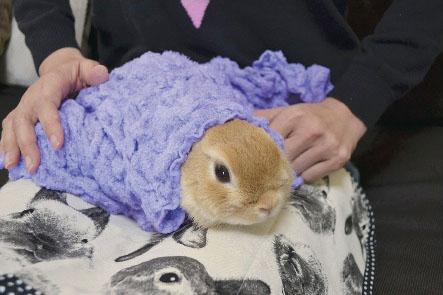 体を冷たいタオルで包む