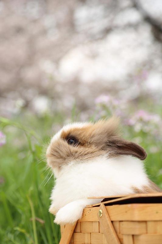 何 を おっしゃる ウサギ さん