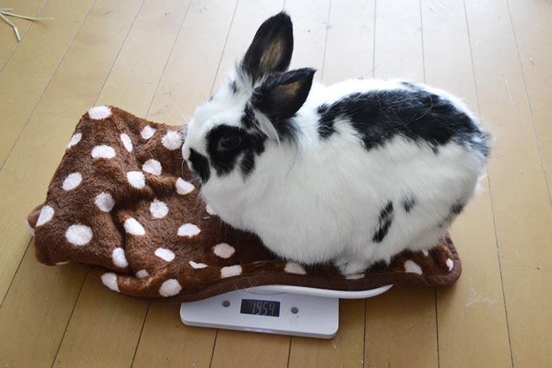 ペレットコントロールをして体重を計ります