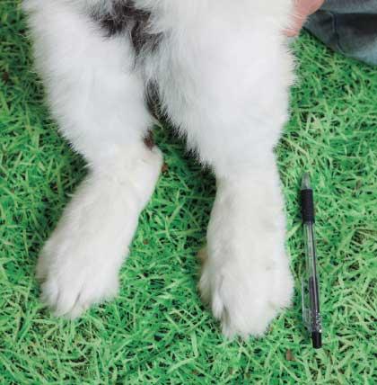 大型種のアンヨはボールペンと同じくらいの大きさ!