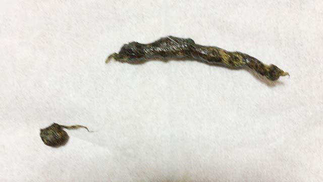 長毛種のうさぎの毛が混同して硬くなったウンチ(うさぎは排出が困難)