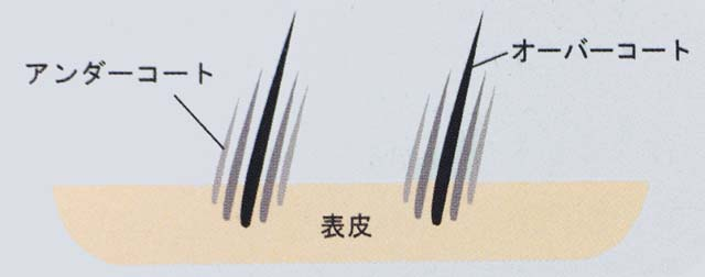 うさぎの毛を図解